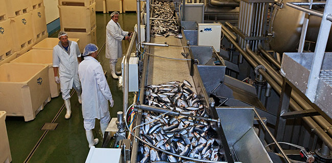 Euro Baltic: the only factory in the whole of Germany for filleting herring
